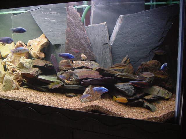 déco aquarium ardoise