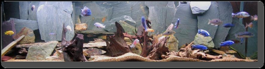 Un aquarium sans substrat nutritif  Aquarium1001